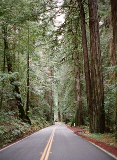 Driving the Humboldt Redwoods State Park in Mendocino California