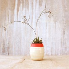 Coral dipped planter