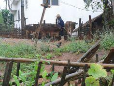 A akha farmer