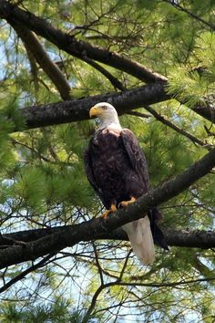 Wisconsin - saw eagles along the Mississippi river on our Prairie du Chien tour | Prairie du Chien WI | #WIGreatRiverRd WISCONSIN Great River Road