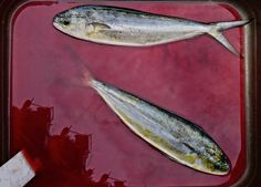 "Saatchi Online Artist Rosaria Forcisi; Photography, ""We, big fish eat small fish"" #art"