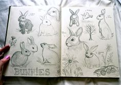 Jenny's Sketchbook. Nature, journal, sketchbook, notebook, dairy, words and images, drawing.