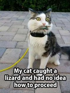 Funny Animal Picdump of The Day 185 Photos) - Cute Animals - Katzen Funny Animal Memes, Cute Funny Animals, Funny Animal Pictures, Cute Baby Animals, Funny Cute, Cute Cats, Funny Humor, Funny Photos, Hilarious