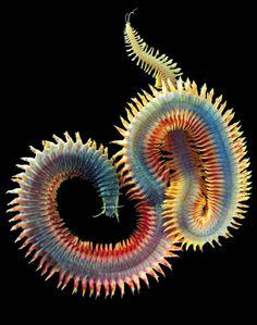 Criaturas de las profundidades del mar