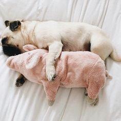 P I N T E R E S T: emelinec18 #pug