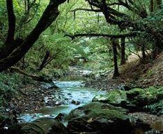 Otari-Wilton's Bush stream. superbe ballade dans la forêt, au-dessus de Wellington. Accessible en bus.