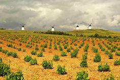 Viñedos y molinos de Castilla La Mancha.