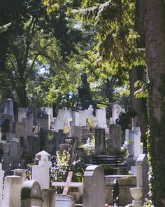 To your genetics you are everything up to the point you mate, and nothing after that. Your sole genetic purpose is to perpetuate your genes. A grave of virgin people is a grave of failures, genetically speaking. ___ #photography #photo #light #nikon #nikond3300 #nikontop #nikonfamily #vsco #cemetery #tree #grave #religion #outdoors #building #park #tombstone #architecture #old #daylight #city #burial #landscape #stone #garden #church