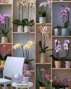 Que delicia tomar uma xícara de chá cercada por lindas orquídeas.  #olioliteam #oliolilifestyle #orquideas #latabledegiselle #flowers #iloveflowers #iloveorchids