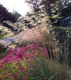 Sedum autumn joy, calamagrostis and stipa