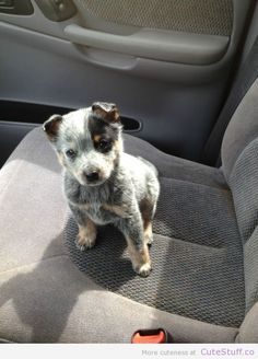 cutestuffdotco:  (via 12 Adorable Puppies On The Way To Their New Homes)