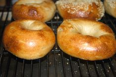 Sourdough Plain Bagels (starter, high protein bread flour, olive oil, malt powder [goes in dough and in boiling water])