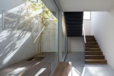 Natural Light, Interior And Exterior, Stairs, Landscape, Lighting, Glass, Wall, Nature, House