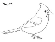 Easy drawing of a bird draw cardinal bird easy bird drawing flying . easy drawing of a bird Easy Dragon Drawings, Bird Drawings, Easy Drawings, Animal Drawings, Cardinal Drawing, Easy Pictures To Draw, Bird Template, Easy Bird, Drawing Videos For Kids