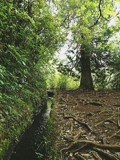 Levada Calderau Verde-Madeira