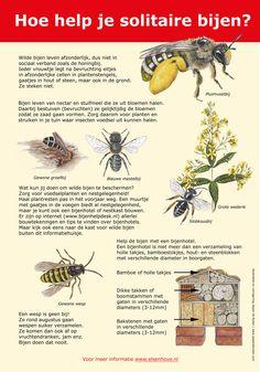 Bijenpaneel gemaakt in opdracht van de Gemeente Amstelveen #wildebij #bijenhotel Garden Insects, Garden Plants, Green News, Nature Journal, Save The Bees, Fauna, Bee Keeping, Botany, Organic Gardening