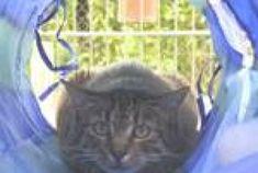 Lilly wurde im Tierheim Freiburg abgegeben, weil sie keinen Freigang mehr haben konnte.  Durch die eingeschränkte Bewegungsfreiheit hat sich Lilly sehr verändert. Sie ist panisch geworden und ließ sich nicht mehr anfassen. Das hat der Umzug ins Tierheim leider nicht verändert. Sie sollte daher in ein katzenerfahrenes Zuhause.