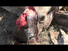 These are real Men….Tune Into Rhino Wars….They help what is defenseless…First us Americans while they were at war…And, now with these Animals over Africa….