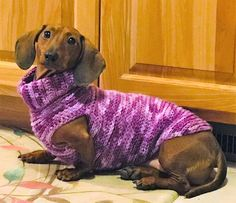 Stunning hand crafted dachshund accessories and jewelery available at Paws Passion Shop! Represent your doxie pup with our merchandise! Dachshund Sweater, Dachshund Clothes, Dachshund Love, Dog Sweaters, Daschund, Cute Puppies, Dogs And Puppies, Cute Dogs, Doggies
