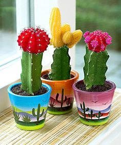 Cacti in Ornamental Mexican Pots Grafted Cactus, Cactus Decor, Cactus Flower, Mini Cactus, Cacti, Painted Plant Pots, Painted Flower Pots, Cactus E Suculentas, Floral Arrangements