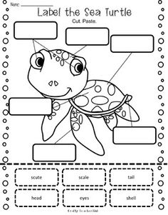 Sea Turtle Research Report Printables / Ocean Theme Sea Turtle Facts, Sea Turtles, Baby Turtles, Preschool Lessons, Preschool Activities, Turtle Crafts, Ocean Activities, Ocean Unit, My Father's World