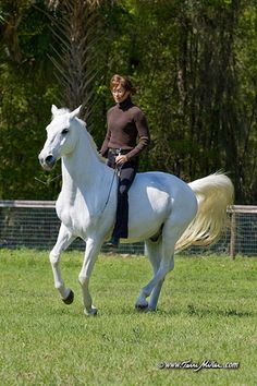 people think riding is easy- i'd like to see you do natural dressage and look this beautiful