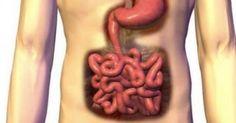 Ο καθαρισμός του εντέρου πρέπει να γίνεται τουλάχιστον μία φορά στους 6 μήνες, με νηστεία, με φυσικά συμπληρώματα διατροφής και με βότανα. Όλες οι ασθένειε