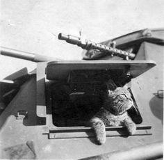 Sd.Kfz. 222 leichte Panzerspähwagen (2 cm) Ausf. B (4-Rad)