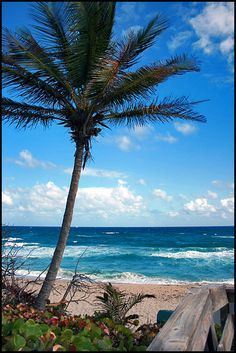 Boca Raton, Florida JOCA