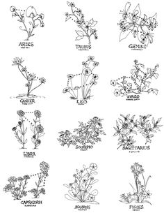 Floral Constellations Small experiment with flowers and sun signs. A few hours each, sharpie on paper. Available here on my RedBubble Aries-Sweet Pea, Taurus-Hawthorn, Gemini-Honeysuckle, Cancer-Water...