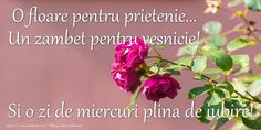 Good Morning, Music, Plants, Watch, Youtube, Mariana, Pictures, Bom Dia, Buen Dia