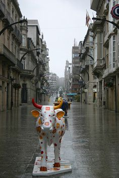 Cows of Vigo