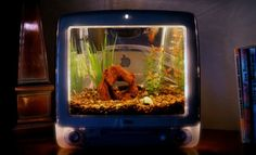 iMac Aquarium Jake Harns recycles old Apple iMac computers, transforming them into fish tank aquariums. Imac G3, Monitor, Pet Fish, Tanked Aquariums, Fish Aquariums, Old Computers, Old Tv, Aquarium Fish, Aquarium Ideas