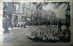 The geese are in town for a busy market day in Knaresborough, North Yorkshire. This postcard may have been an advertisement for Southwell Chemist on the High Street. Who is looking at the camera from the doorway? Old Pictures, Old Photos, On The High Street, Close To Home, Local History, Chemist, North Yorkshire, Old Postcards, Doorway