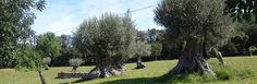 All Companies | The Olive Oil Source