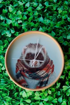 Zoo portrait animal clocks: Ferret in a scarf!