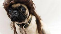 12 Pug Tips for a Stellar Halloween: Sometimes simple is best. #humor @BadgerMaps