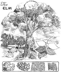 Step 05 drawing elm trees How to Draw Trees, Bark, Twigs, Leaves and Foliage Drawing Tutorial