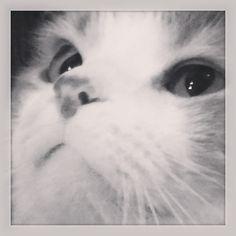 Sweetycat