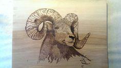 Big Horn Sheep, woodburning, pyrography on sycamore