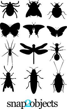 insects_cs4.jpg - 無料イラスト・フレーム be-bop.info