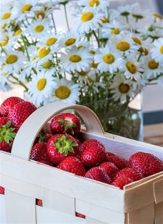 Capsunile si beneficiile lor – Food is love Healthy Treats, Healthy Eating, Strawberry Fruit, Red Fruit, Strawberries, Ginger Tea, Getting Hungry, Creative Icon, Healthy Alternatives