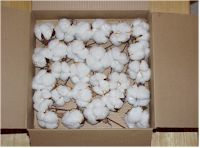 Cotton Bolls for crafting!