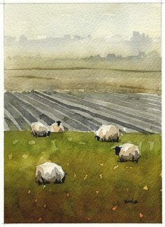 Scots Sheep 2 by Iain Stewart Watercolor ~ 5 x 7