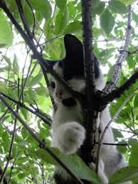 cats in trees -