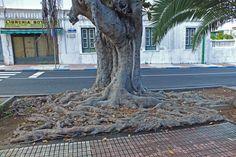 De visita en el Jardín Botánico de Puerto de La Cruz. Tenerife. Islas Canarias. Spain.. [By Valentin Enrique].
