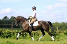 Afbeeldingsresultaat voor fotoshoot paarden