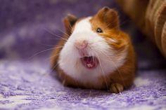 Little yawn!