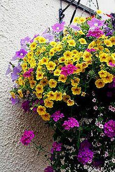 Lilac petunia, yellow calibrachoa, purple verbena