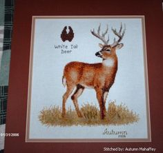 White Tail Deer cross stitch pattern.